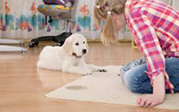 Carpet Cleaning Services Crows Nest